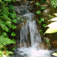 Small-waterfall-decoration-with-fresh-and-clean-water-with-water-flow-raced-along-with-stone-in-around-waterfall-and-green-plants-and-creeping-plants-decor-waterfall